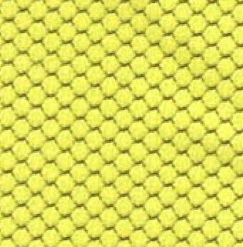 Bloom Mustard